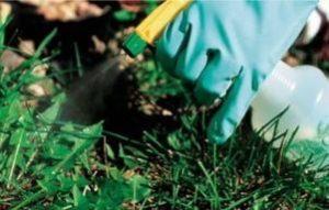 химические средства от сорняков